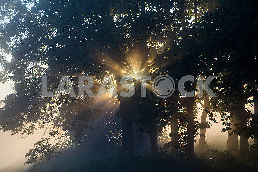 Beautiful natural summer background. the sun's rays pass through a tree — Image 70696