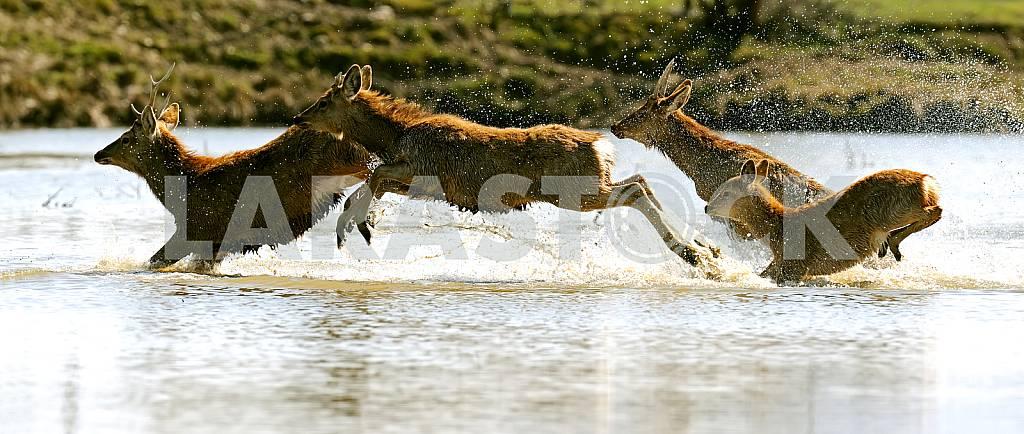 Roe deer in their natural habitat — Image 25707