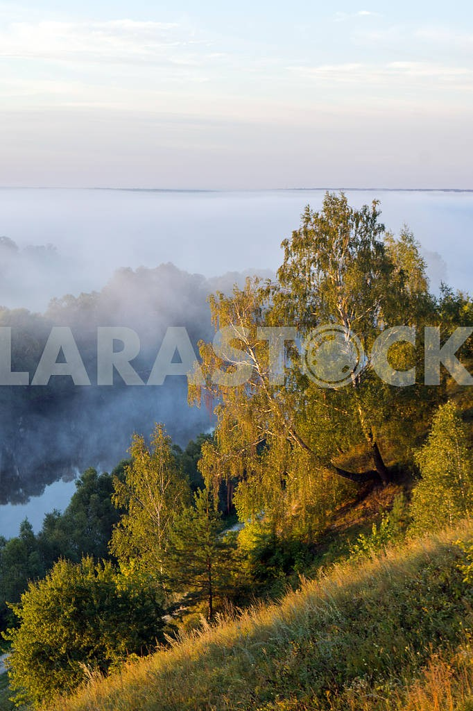 Trees on a background of fog. Mezin. Chernihiv region — Image 22047