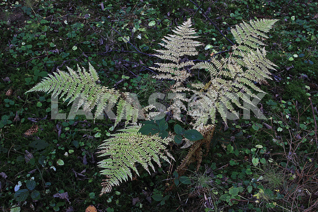 Fern leaves in the forest — Image 68187