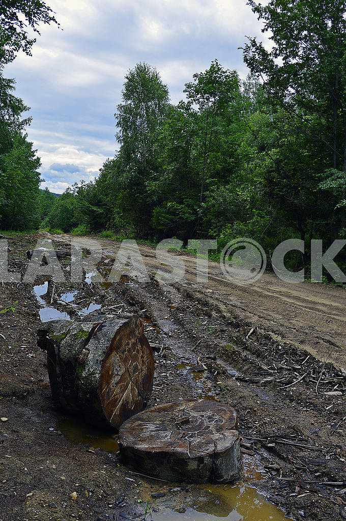 Bumpy forest dirty road — Image 73618