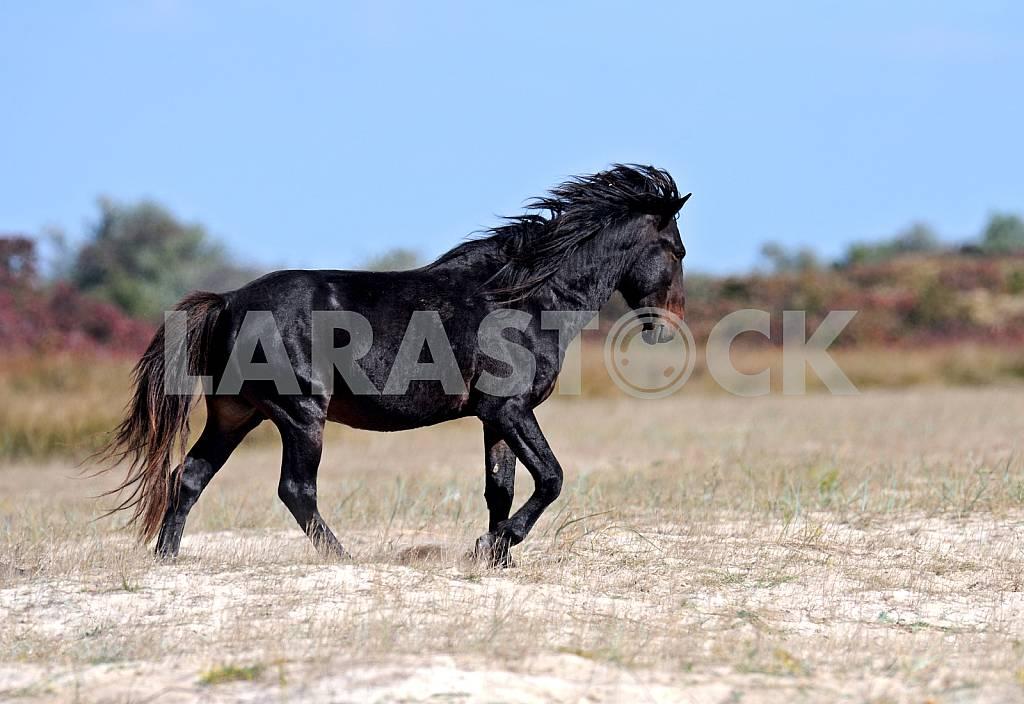 Black foal — Image 25138