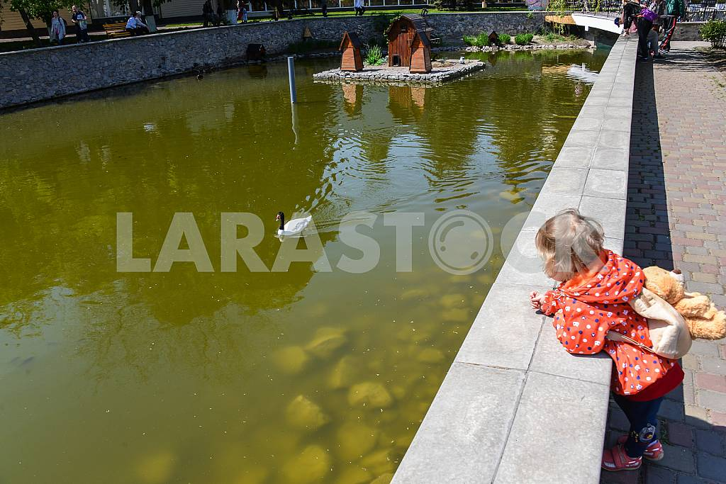 Girl looking at a swan in a pond — Image 29609