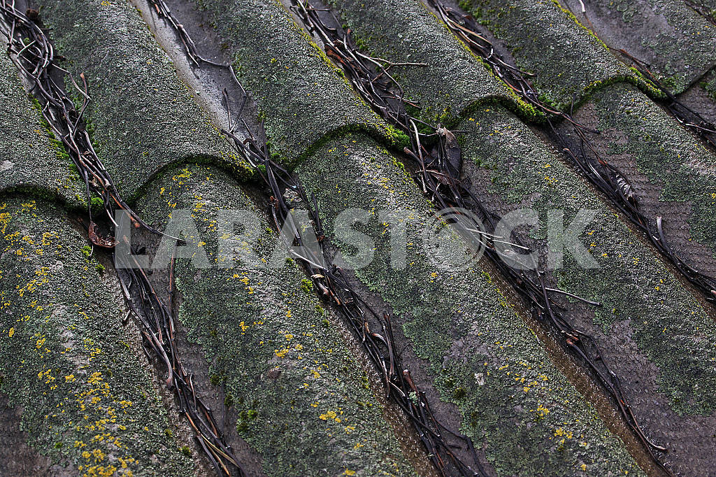 Old slate roof covered with moss — Image 68459