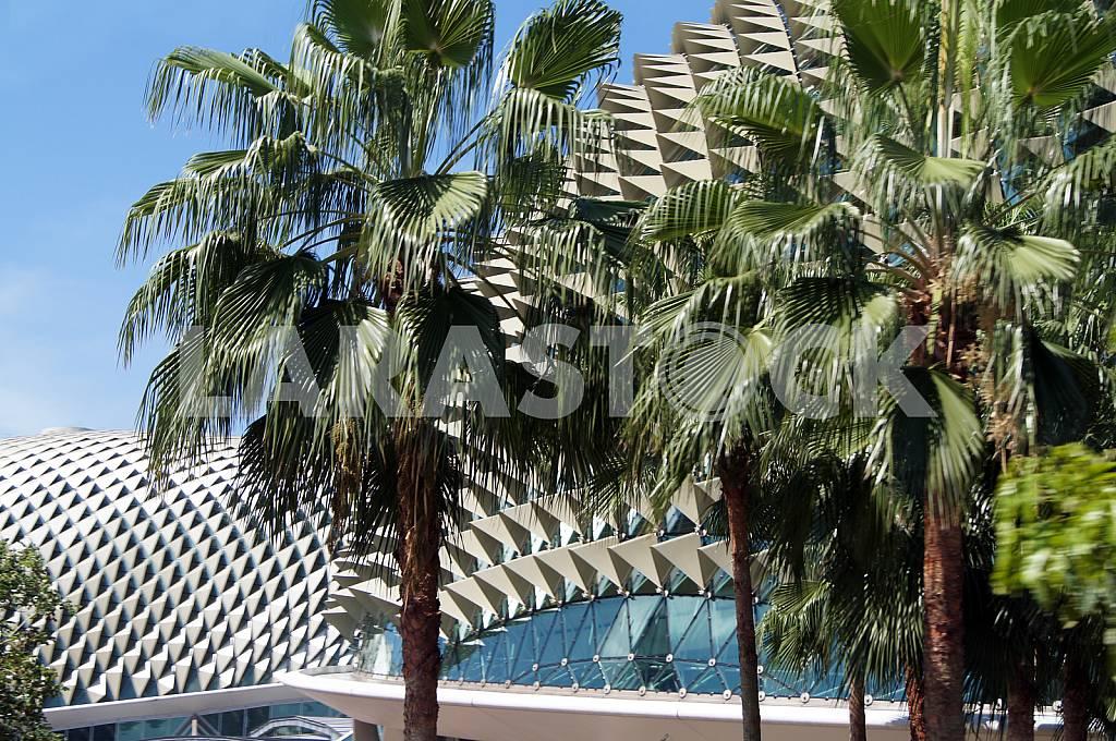 Singapore. Palm trees — Image 26069