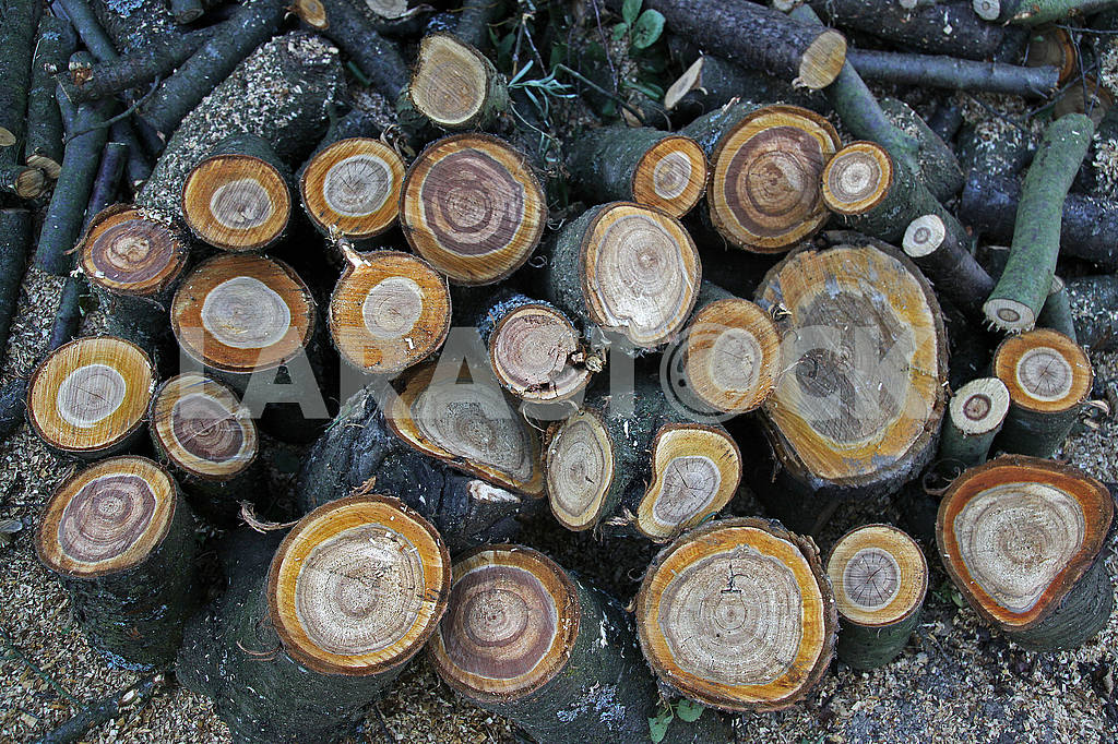 A pile of logs in the garden — Image 53479