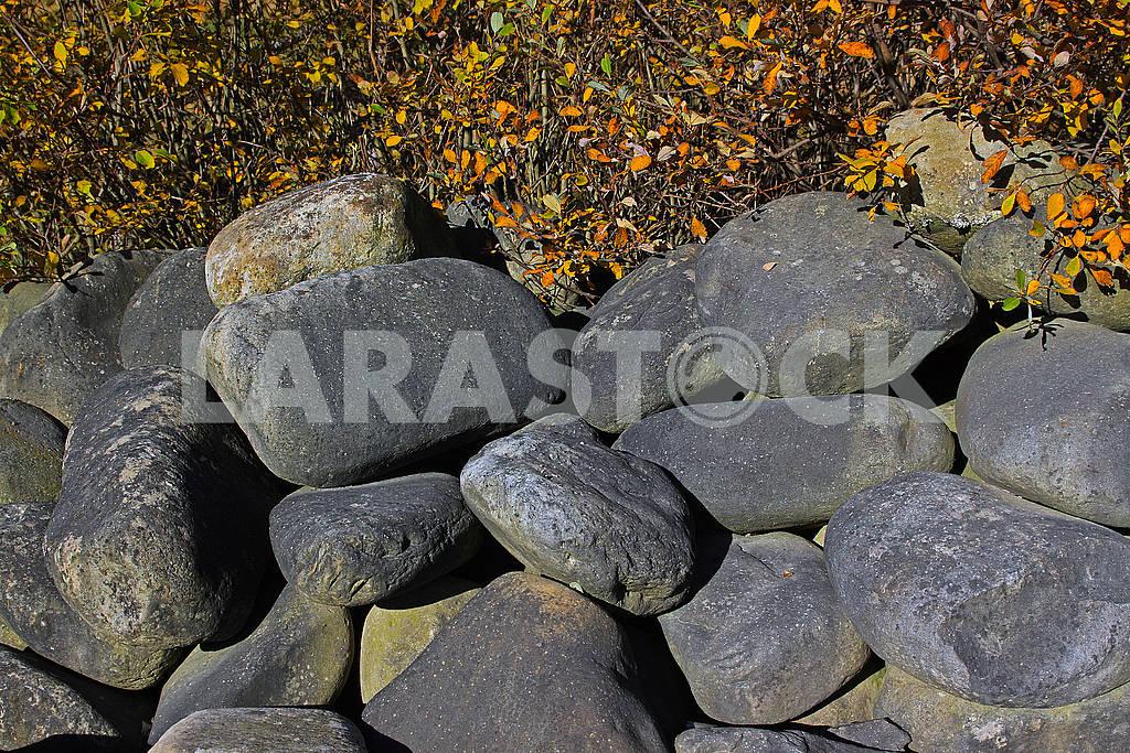 Large oval stones under a bush — Image 74289