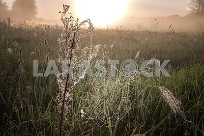Beautiful natural summer background. the sun's rays pass through fog and tree. closeup drops of dew on the spiderweb at sunset sunrise