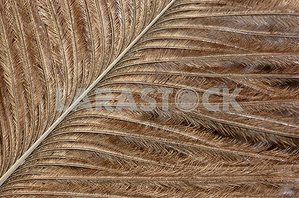 Structure of a feather