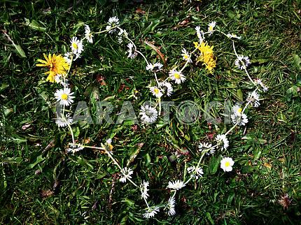 Heart Shaped Daisy Chain