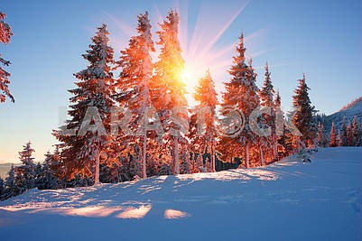 frosty sunrise in the Carpathian mountains