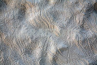 traces of lizards in the sand as a background