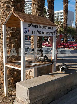 Cat Feeder in Eilat