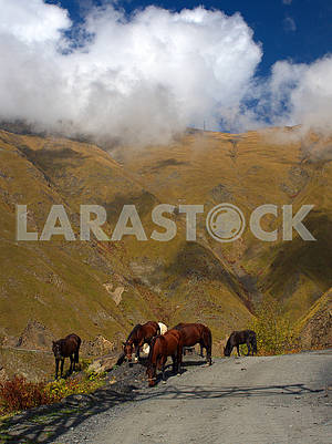 Horses graze near the mountain road