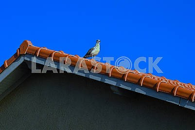 The seagull sits on the roof