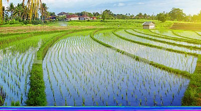 Empty traditional Bali rice field panorama with water
