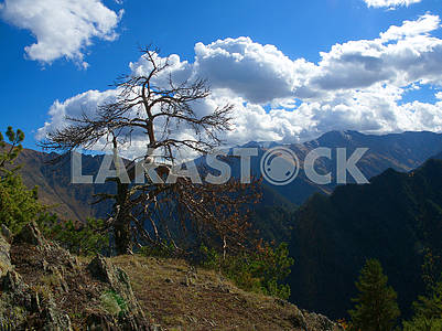 Dried tree in the mountains
