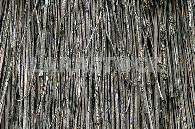 Natural abstract gray background, texture of the dry reeds.