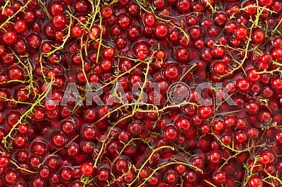 Fresh  red currant background