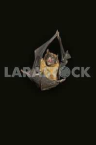 Bat, cry
