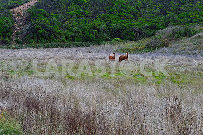 Two horses in open field with dry grass