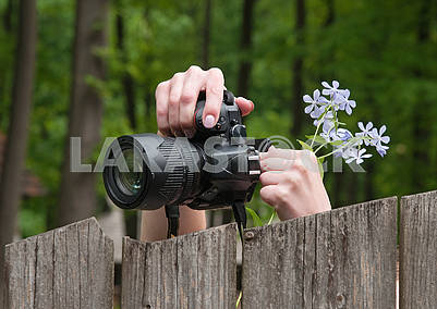 Photographer are taking pictures of nature. Green forest.