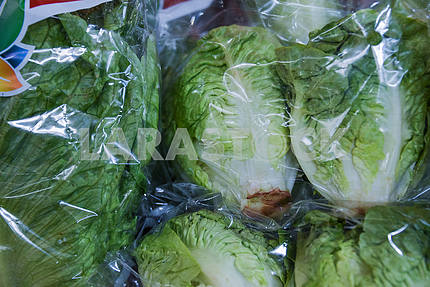 Young cabbage packed in polyethylene