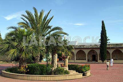 Monastery cats. Limassol. Cyprus