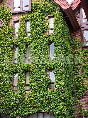 Wall of a building with curly leaves