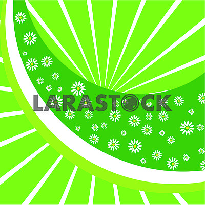 Green floral background with camomiles