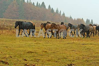 A herd of horses in the autumn