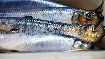 Fish herring lie on the counter of the store