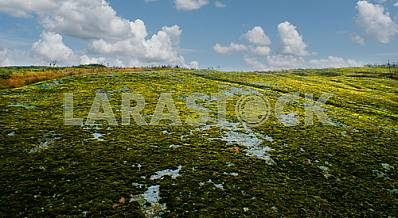 Granite plateau covered with moss, tract Cascades