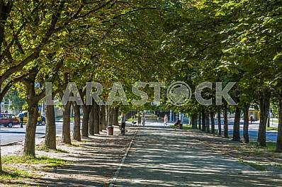 Chestnut Alley in Cherkassy