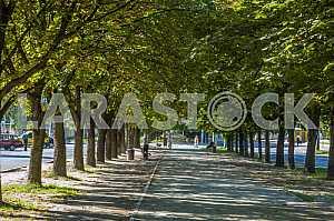 Chestnut Alley in Cherkassy