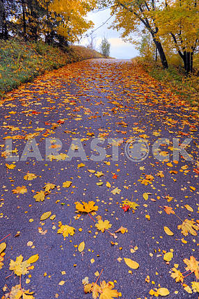 Path in park covered with autumn leaves