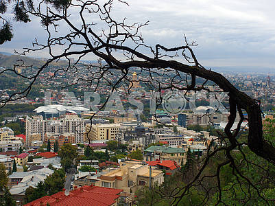 Panorama of Tbilisi, old tree
