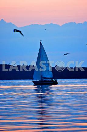 Yacht at sunset, sun sail, sea gulls, sea
