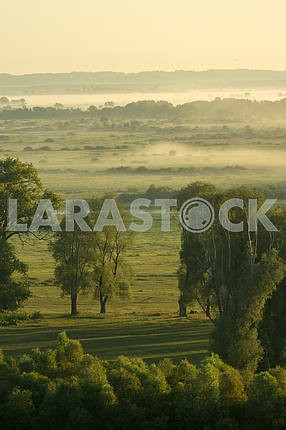 Mezin. A field with trees in the fog. Chernihiv region