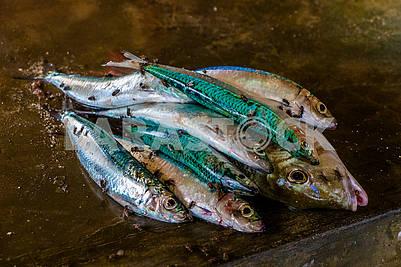 Flies on the fish of Zanzibar fishermen