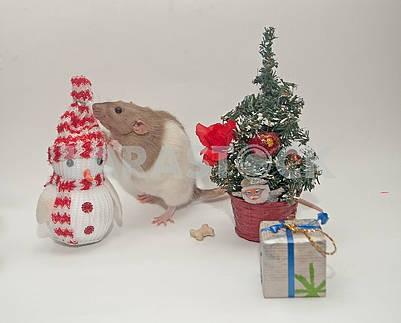Новогодние игрушки и крыса