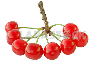 Cluster of a cherry
