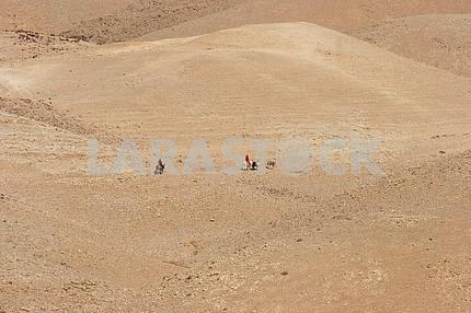 Bedouins in Judea desert