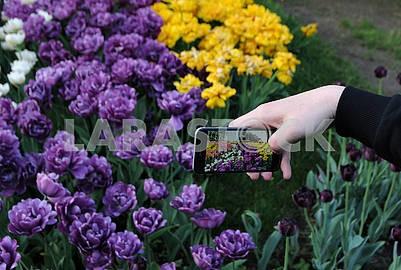 "Tulips Festival ""Around the World"""