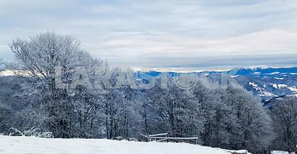 Trees covered with hoarfrost. Carpathian Mountains. Winter lands