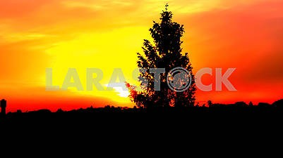 Tree on a horizon at sunset