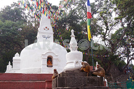 Temple complex (monkey hill). Nepal
