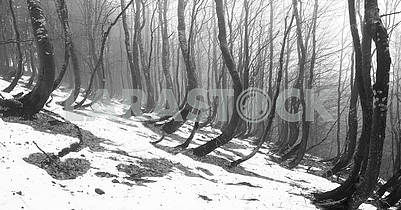 Snow thawed about beeches