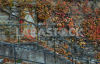 Stone wall covered with vine branches