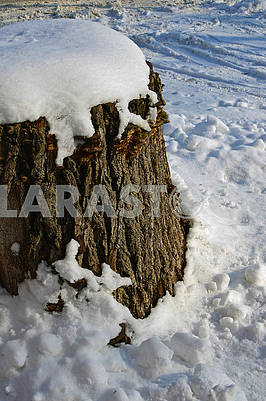 The old big stump is covered with snow